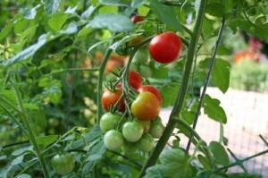 Vegetable-Garden1-b