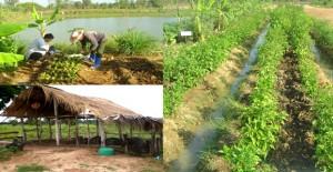 เกษตรพอเพียง_farmthailand