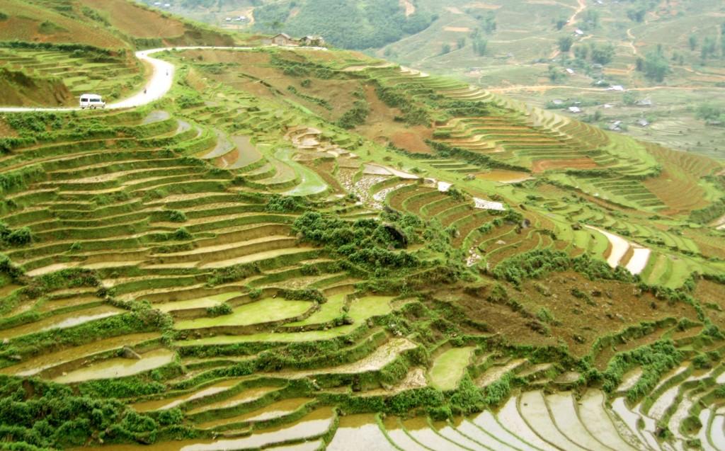 เกษตรเวียดนาม