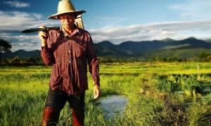 โครงการส่งเสริมการเกษตร