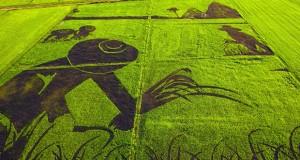 organic-rice-art