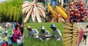 ภาพตลาดเกษตรกรรม_farmthaialnd