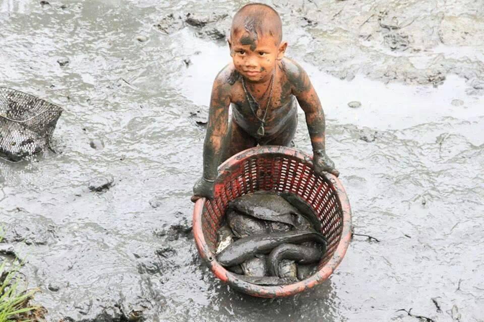 การเลี้ยงปลาในนาข้าว - 2
