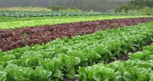 การทำฟาร์ม,การเลือกทำเล,เทคนิกการเลือกพื้นที่