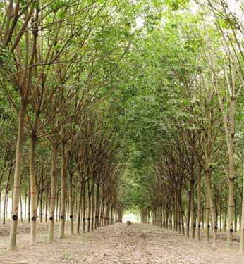 พัทลุงเร่งเปิดพื้นที่เป็นเมืองเกษตรสีเขียว