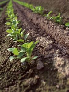 ส่งเสริมพัฒนาพื้นดินและน้ำเพื่อวิถีการเกษตรที่ยั่งยืน