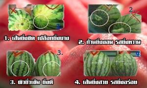 วิธีการแลือกซื้อแตงโม