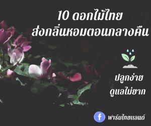 10 ดอกไม้ไทยส่งกลิ่นหอมตอนกลางคืน